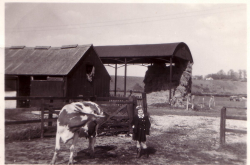 the farm yead in 1960s