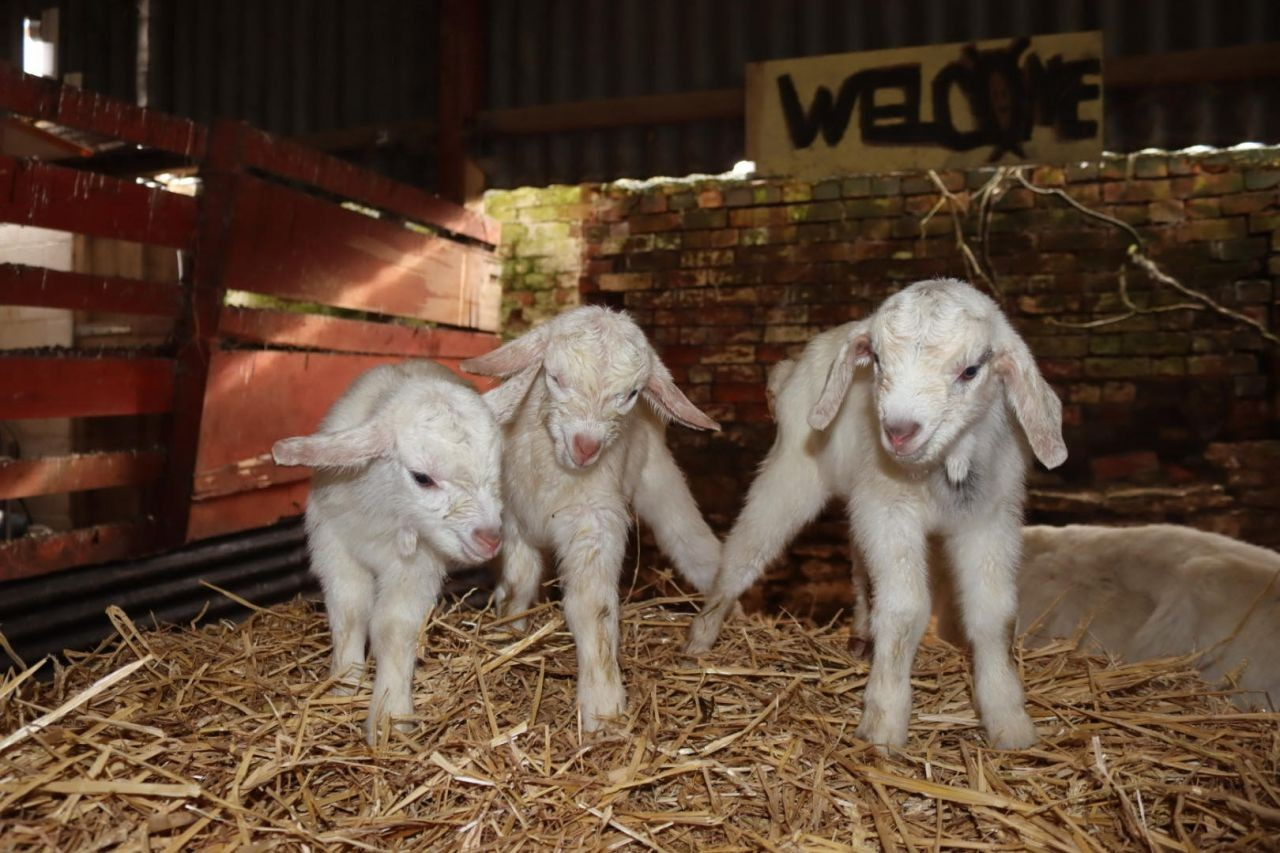 Triplet kids born today